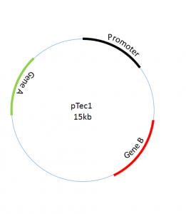Designing Schematic Plasmids using powerpoint