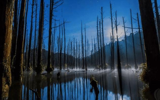 台灣秘境之水漾森林|南投