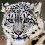 mac_os_x_10_6_snow_leopard_head