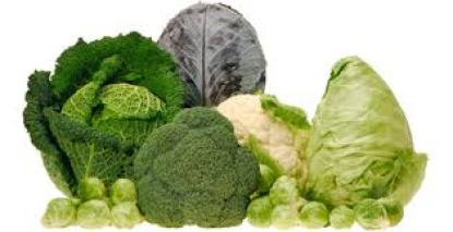 Kale, Broccoli, Cabbage and Lettuce.jfif