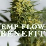 Things To Consider While Buying A CBD Hemp Flower