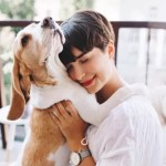 How Your Pet Dog Can Get Benefitted From Light Therapy