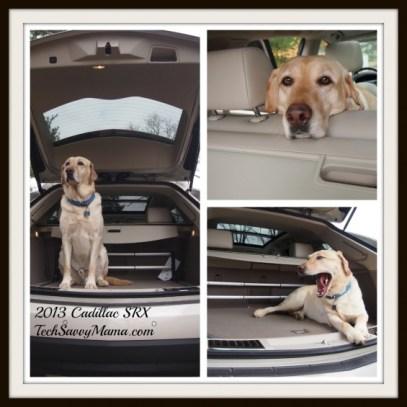 Cadillac-SRX-2013-Labrador-Fits-TechSavvyMama.com