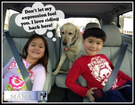 7 Reasons Why the Toyota Sienna is Perfect for Large Dogs #SiennaDiaries I TechSavvyMama.com