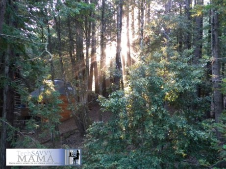 Cabin in the California Redwoods