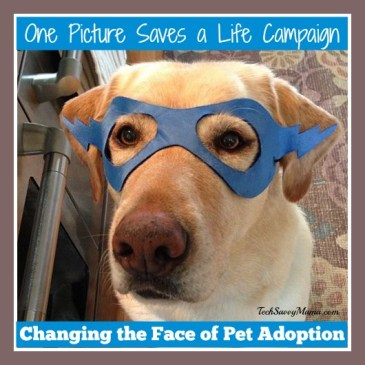 One Picture Saves a Life  Pet Adoption Campaign
