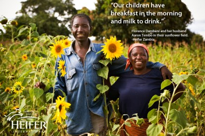 2014 Gift Guide: Gifts that Give Back- Heifer International