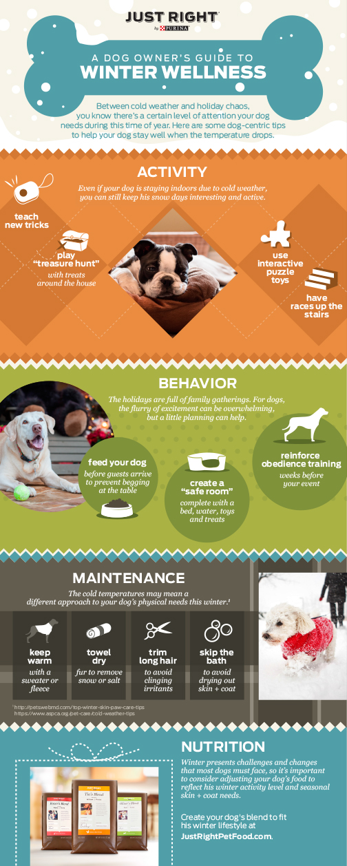Just Right By Purina Winter Wellness Tips for Dogs
