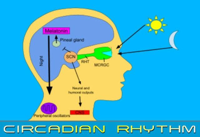 circadian-rhythm