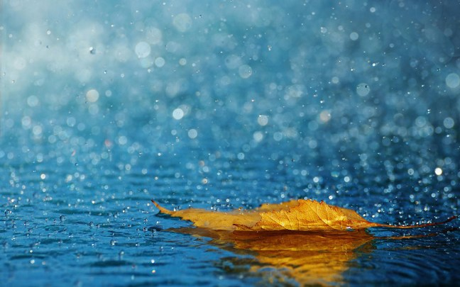 Rain-Drops-Leafs-Android-Wallpaper-High-Resolution