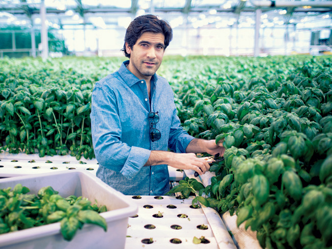 The future of cultivation - urban farming?