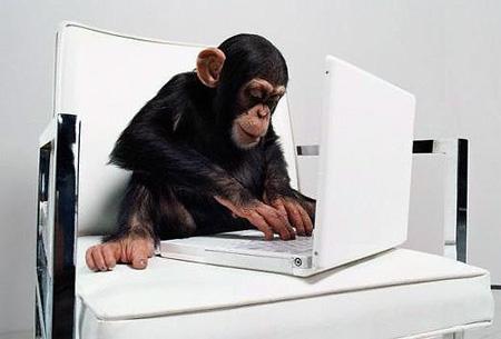 Monkey tweets