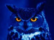 Night owl data