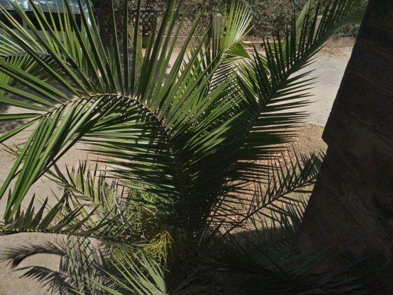 Plant shot on the TECNO Camon 11