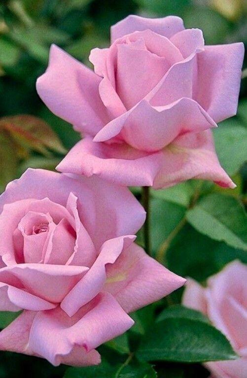 a delicadeza de uma flor