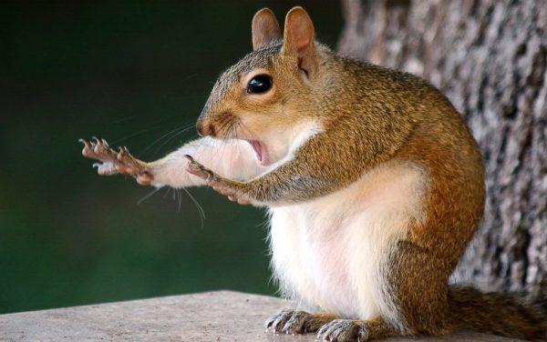 Fotos engraçadas de animais rato com mãe estendida