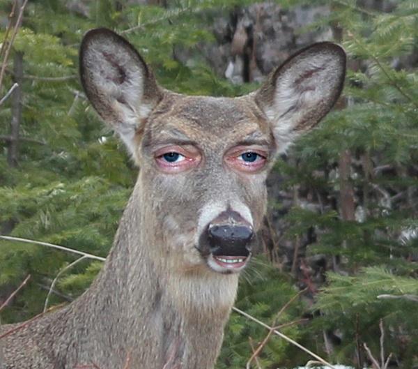 Imagem animal estranho.