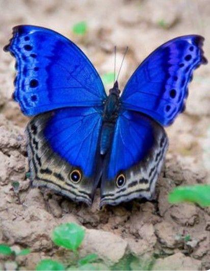 azul combina com tudo