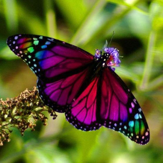 muito linda essa borboleta