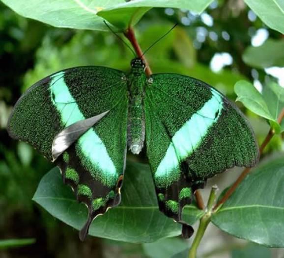 verde combina com tudo