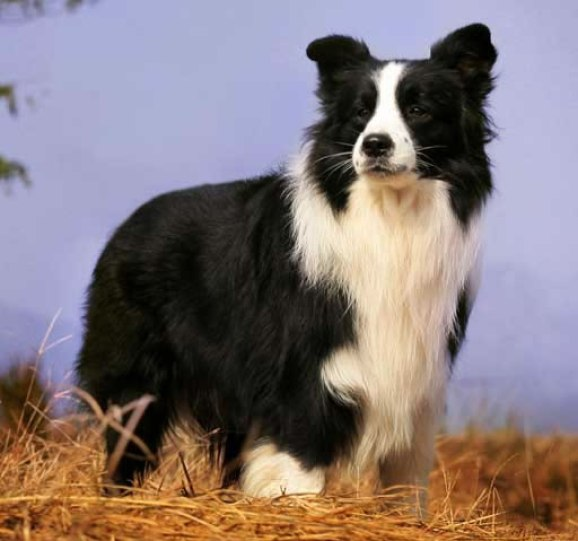 cachorro preto lindo e adorável
