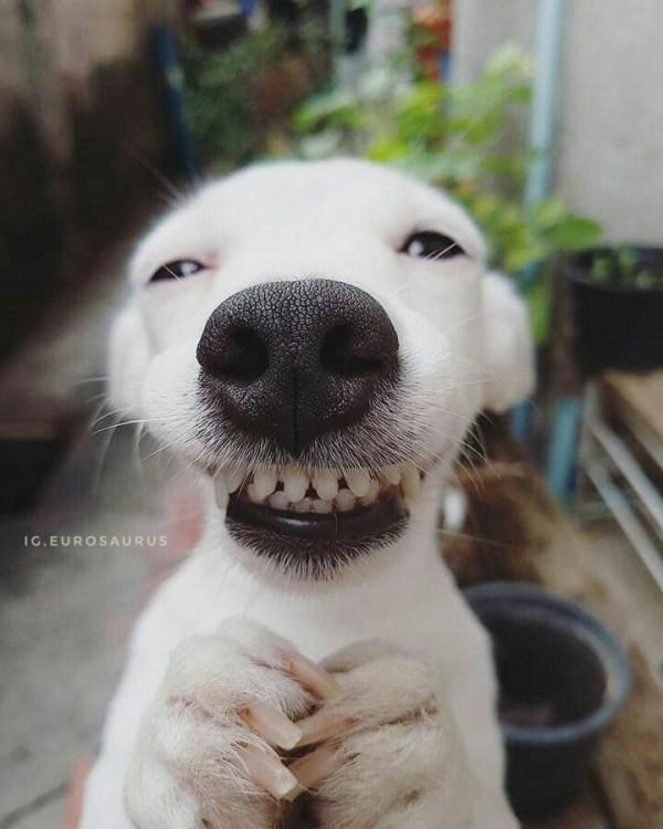 Imagem de cachorro feliz