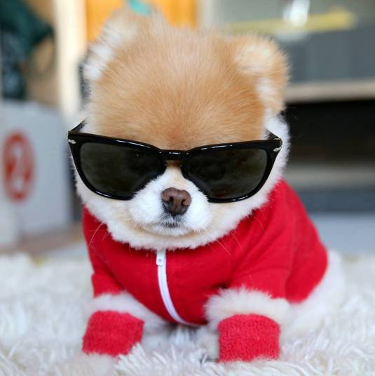 Foto de cachorro foto de oculos
