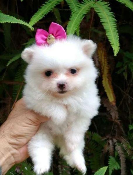 Cachorro fofo e pequeno