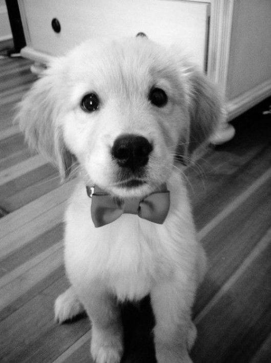 Cachorro lindo feliz