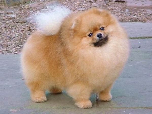 Imagens de cachorros adoráveis