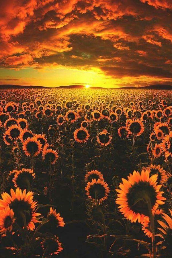 da cor do sol