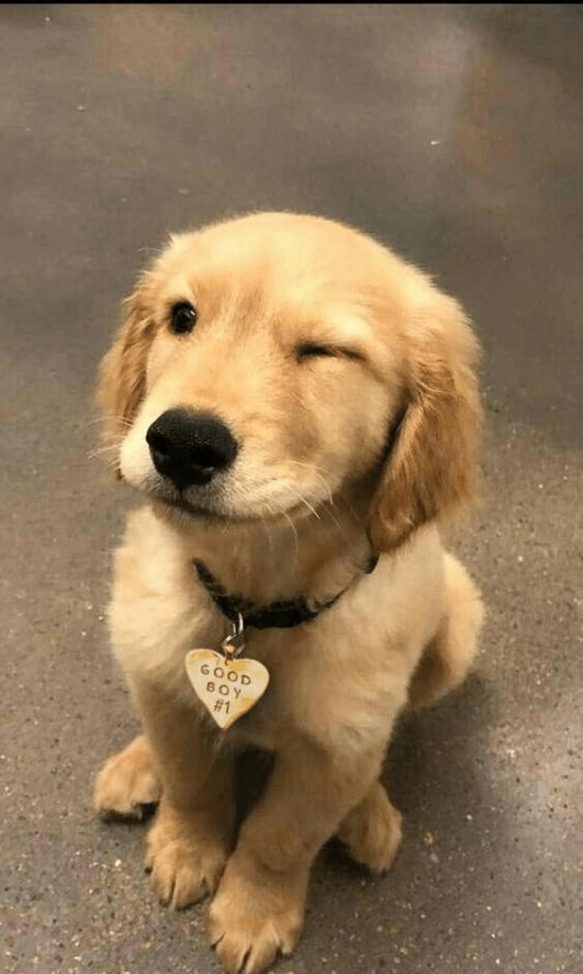 Fotos de cachorros tumblr