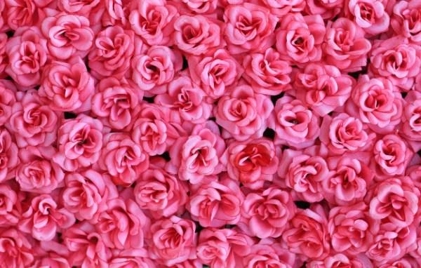 rosa são rosa