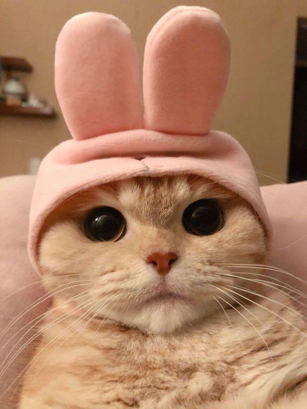 gatinho fantasiado de coelho
