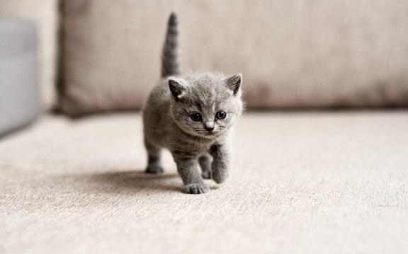 gatinho pequeno