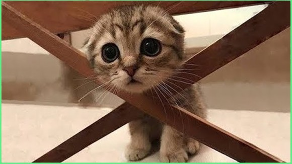 gatinho preso