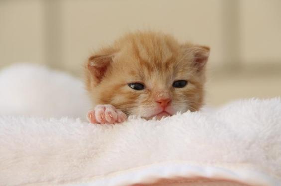 gato com sono