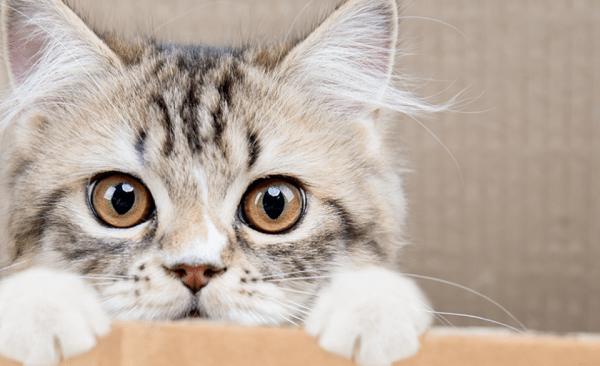 Lindo filhote de gato