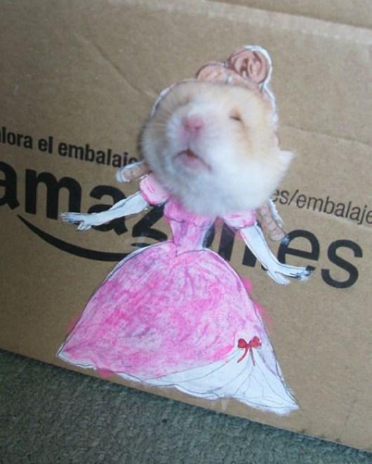 Foto engraçada da ratazana