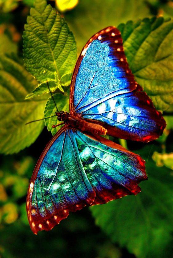 linda e muito azul