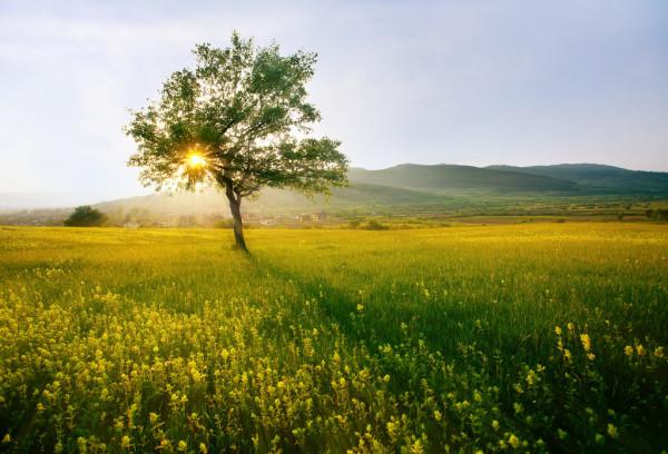 Foto perfeita de campo, olha o que a natureza faz.