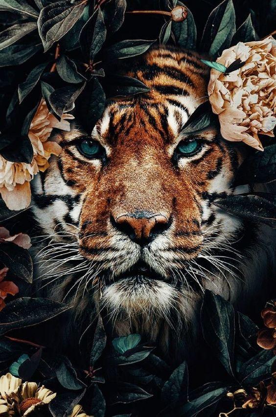 papel de parede tigre