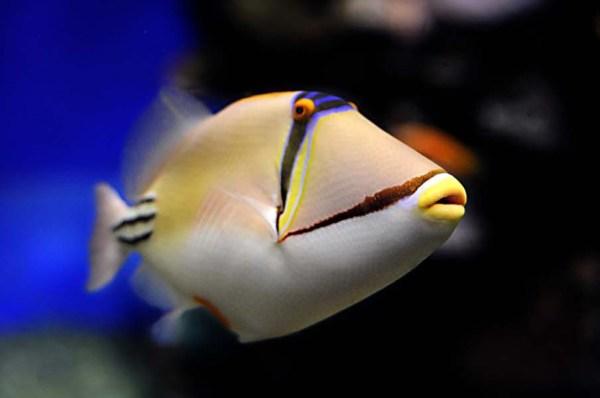 foto de peixe no fundo do mar