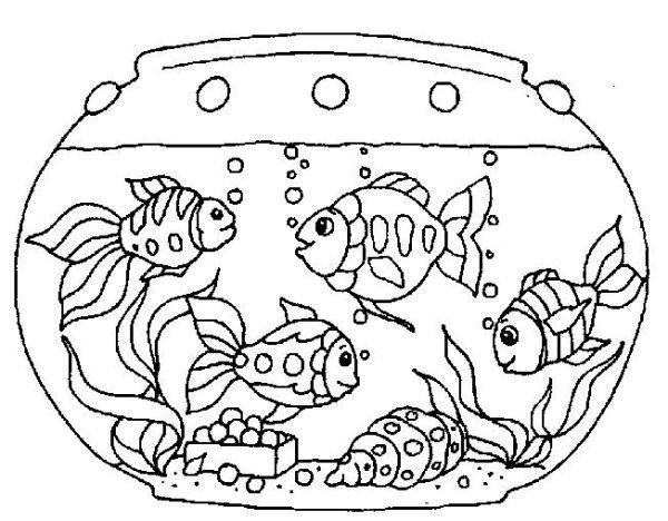 peixes no aquário.