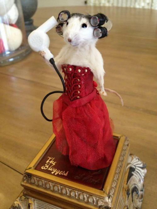 Fotos engraçadas de animais rato no salão de beleza