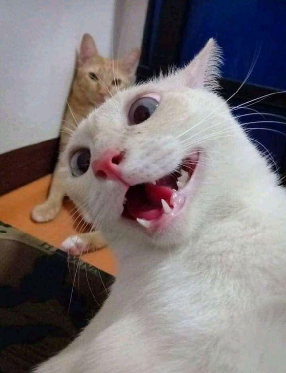 Foto engraçada selfe do gato