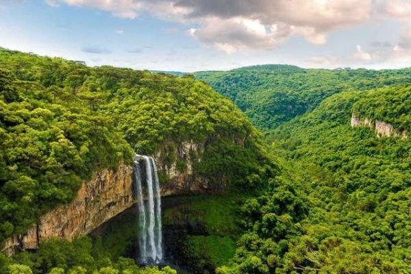 paisagem da floresta bonita