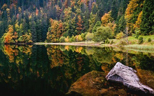 Linda imagens florestal
