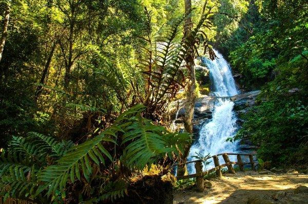 Imagem da floresta