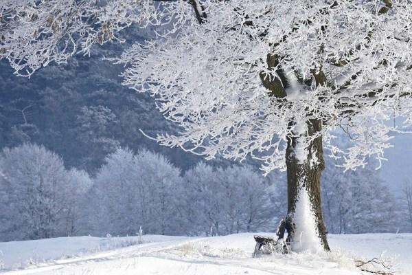 Estação inverno.